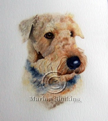 Watercolour head and shoulders painting of an Airedale gazing into the distance