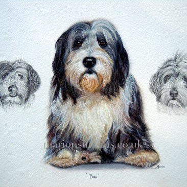 'Boe' the Bearded Collie is sitting facing the viewer in a full body pose. There are two smaller drawings in pencil either side of his portrait showing him in his more usual poses