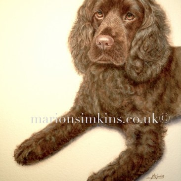 'Coco' the Spaniel is a head and partial body watercolour. Coco is looking to the left of the viewer with hazel eyes and a pink humid nose