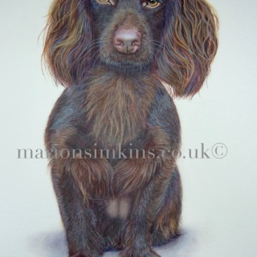 'Dixie' the Spaniel is a full body watercolour portrait. Dixie is sitting facing the viewer straight on. She had beautiful hazel eyes.