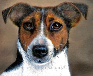 'Gravy' - Jack Russell is a close up of her face from a larger painting called 'Gravy & puppies'. Gravy is looking directly at the viewer with incredible brown soulful eyes. Oil on linen