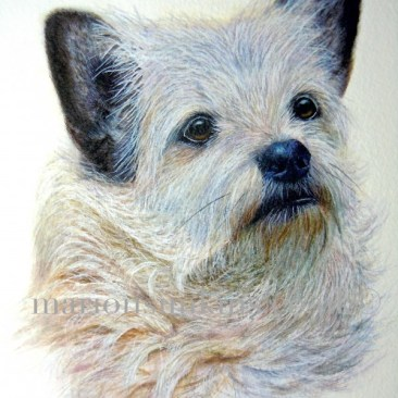 'Lucy' the Terrier mix is a head & shoulder dog watercolour pet portrait. Lucy is looking intently to the right of the painting. Her fur is coats and wiry, she has black ears with a slight discolouration around her mouth.