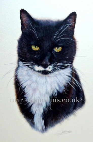 'Max' the Cat, close up is taken from the larger Montage painting. The photo is enlarged so that you can see the patterns in Max' yellow eyes, his whiskers and even his eyebrows.