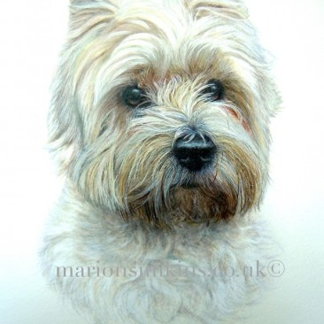 Bespoke commissioned head & shoulder pet portrait watercolour of 'Poppy' a West Highland white terrier with big brown eyes a black shiny nose and some brown discolouration around the mouth.