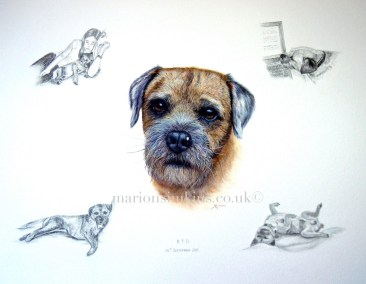 'Ralph' The Border Terrier original pet portrait watercolour with small pencil drawings of Ralph in poses reflecting his personality - laying on the sofa, head on the computer, snuggling with his owner and laying on his back
