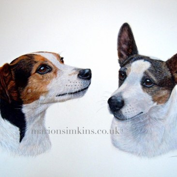 Watercolour head and shoulder portrait of two Jack Russell's, one dog looking to the left and one dog looking to the right.