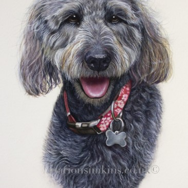 Detailed-pet portrait- hand painted-watercolour-fine art-dog painting-black labradoodle-commissioned-50th birthday-surprise-present