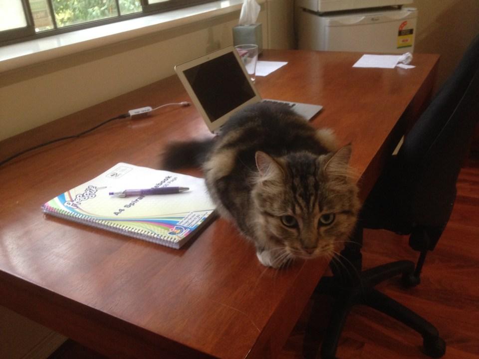 KSP cat by Ashleigh Hardcastle via KSP Writers Centre