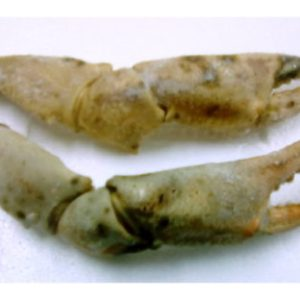 Imagen del producto bocas en Mariscodehuelva.es