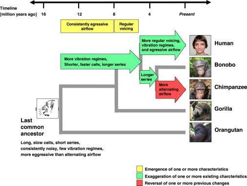 timeline-apes-laughter