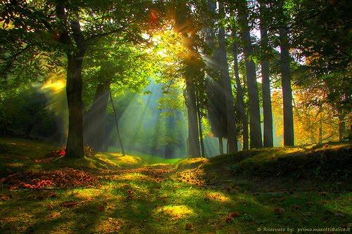 Sunray Forest, Emilia Romagna, Italy