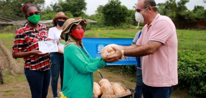 Pequenos agricultores de Marituba recebem sementes especiais para cultivo do milho
