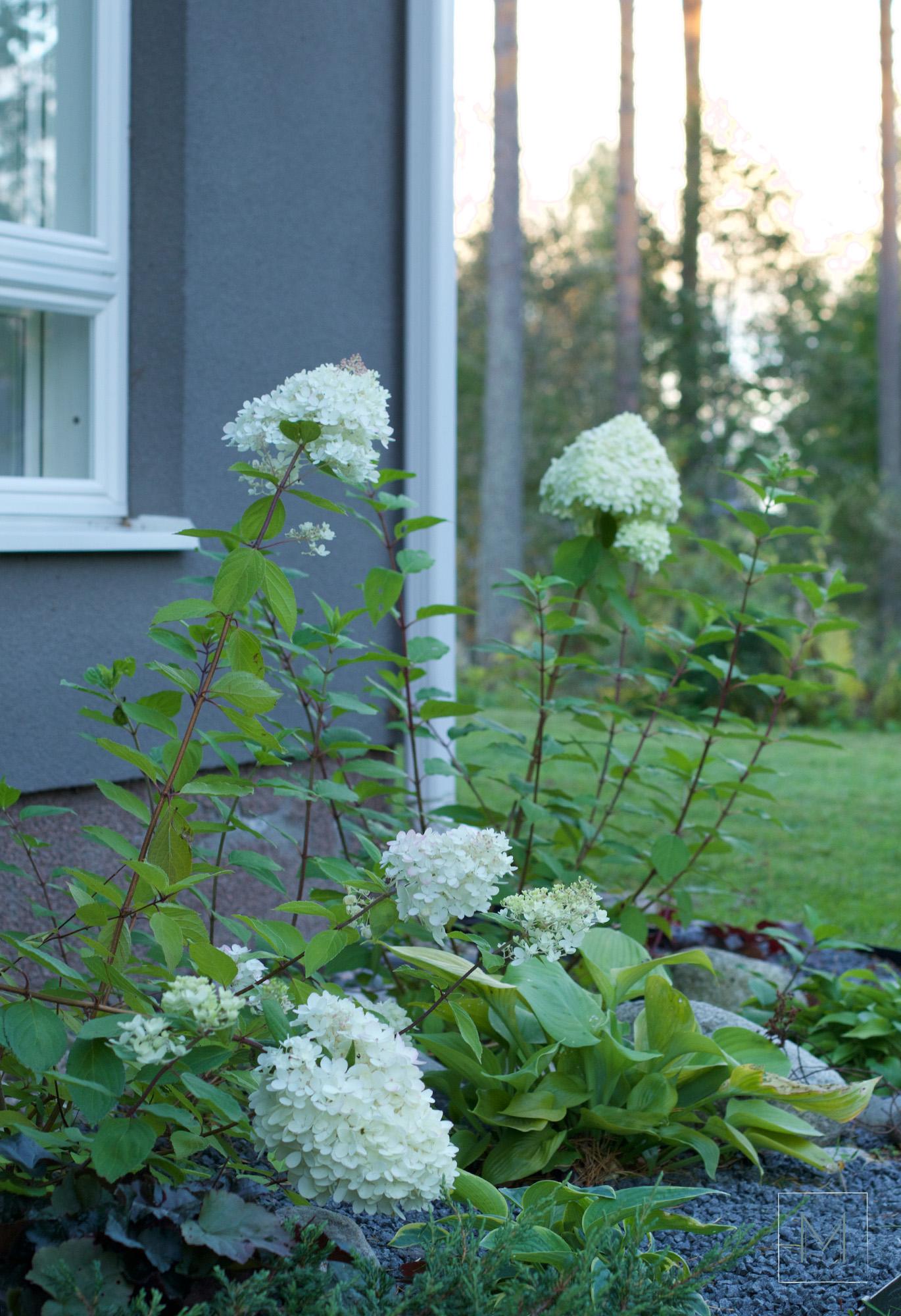puutarhansyksya5