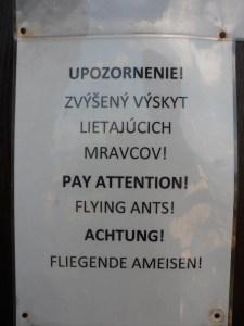 I do not love flying ants