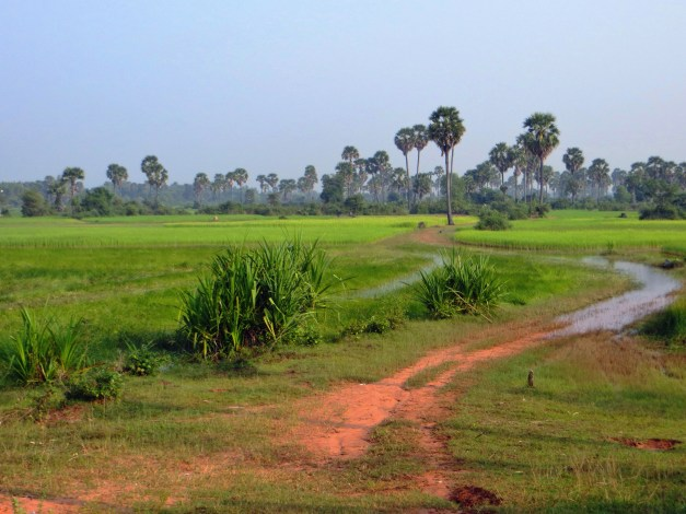Yup - our path through a rice field