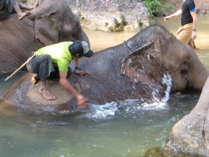 The elephants apparently really love their baths