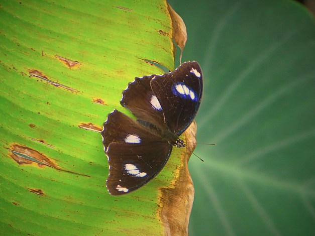 A jungle butterfly