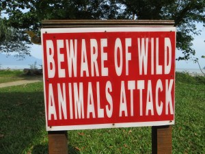 A warning before we hit the trail at Bako National Park. I learned what it was about toward the end of the day as I was sipping water and chatting with a Danish friend as she ate a late lunch, when suddenly a monkey pounced on the table and decimated her lunch.
