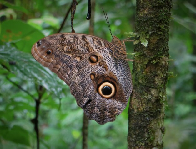 """A butterfly we spotted on our """"hike"""""""