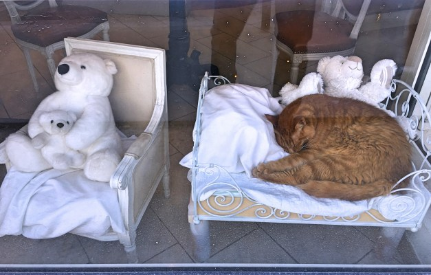 And finally. We're walking past this little store on a Sunday when everything was closed. Teddy bears, sleeping cat, and you think we could NOT take a picture?