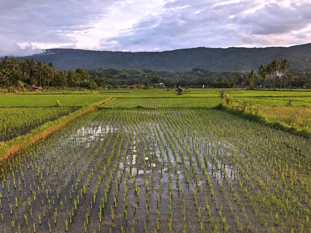 And in Bali you can never have too many pictures of rice fields, right?