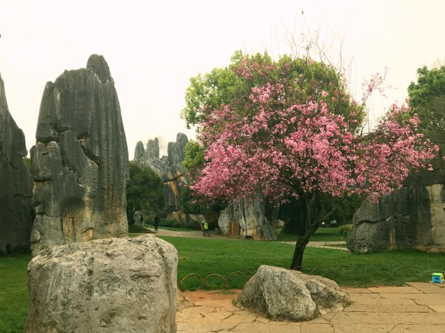 Limetone karsts AND cherry blossoms