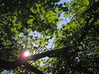 Hope, Leaves, and Light