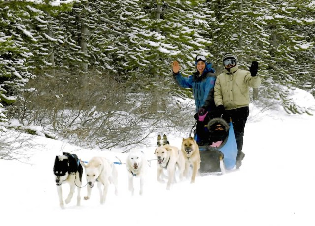 Dog sledding in Canmore