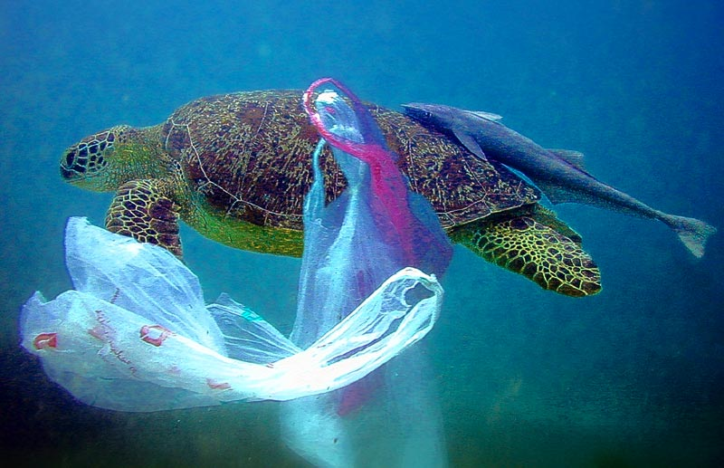 Plastic-Pollution-Lakes-and-Oceans