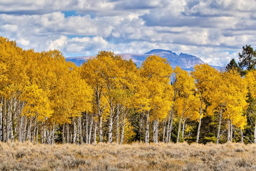 Mark Epstein Photo | Golden Aspens Under the Sleeping Indian