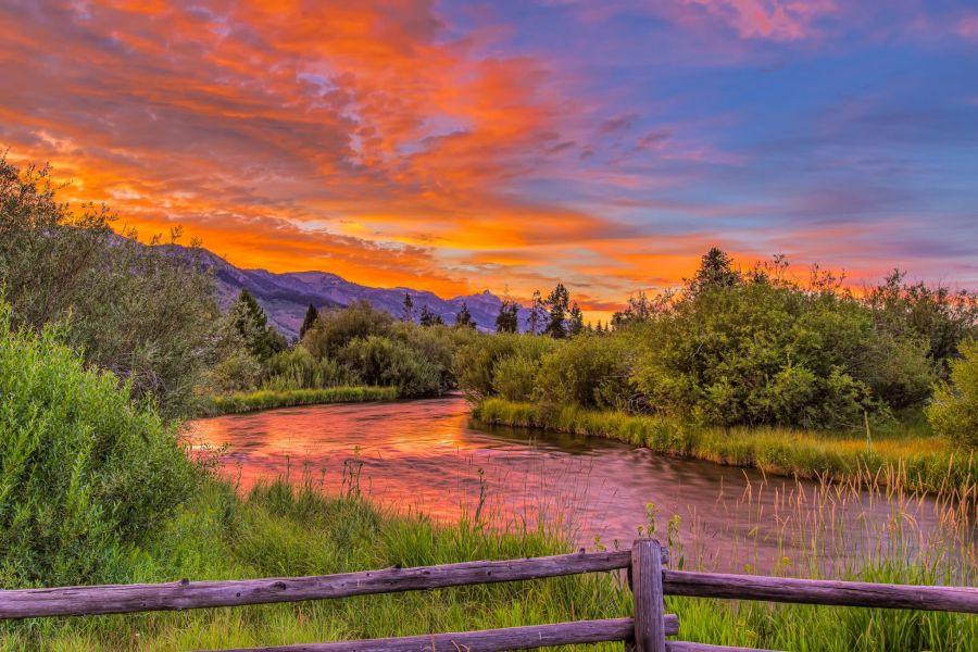 Mark Epstein Photo   Pine Meadow Moment