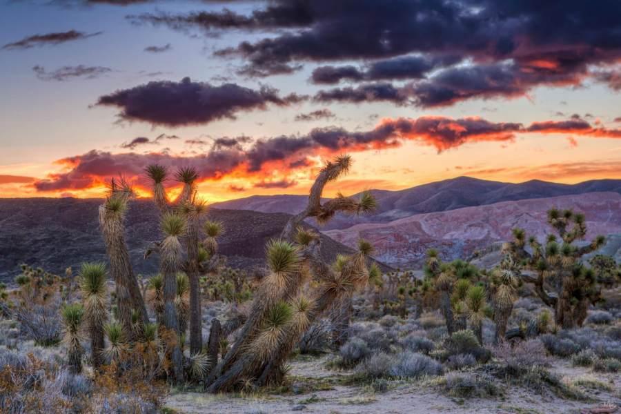 Mark Epstein Photo | Desert Fire