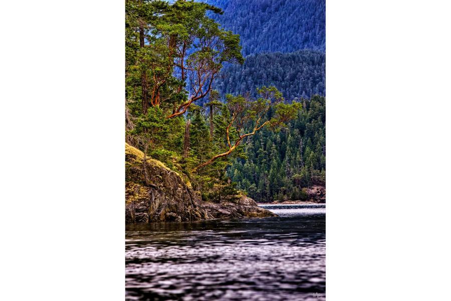 Mark Epstein Photo | Cedars Over the Sound