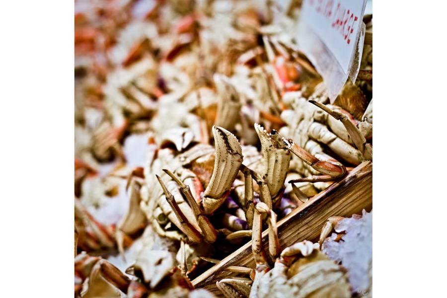 Mark Epstein Photo | Crab for Dinner