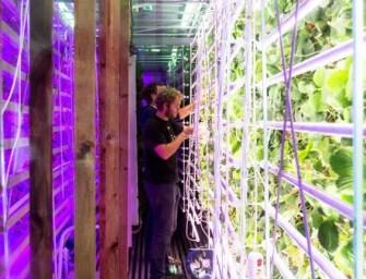 L'agriculture urbaine s'invite en rayon