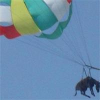 Una acción publicitaria obliga a un burro a volar en parapente