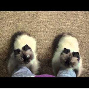 """9 anuncios de gatos que no sólo dicen """"miau"""""""
