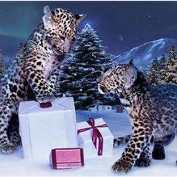 Cartier vuelve con una pieza visualmente asombrosa en un navideño anuncio repleto de joyas