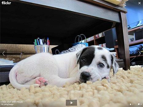 """Yahoo! hace pasar a Flickr por el quirófano y el resultado es """"cool"""", muy """"cool"""""""