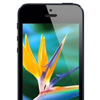 La pantalla del iPhone 5S será dos veces más nítida que la del iPhone 5