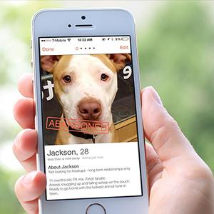 140804105651-dog-tinder-620xa