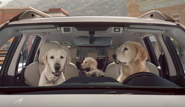 Estos peludos conductores regresan a los spots de Subaru