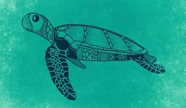 """Las webs de los publishers se liberan de su caparazón de """"tortugas"""" con el nuevo RGPD"""