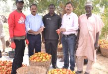Olam Nigeria's Pilot Farming Project To Boost Nigeria's Tomato Value Chain-marketingspace.com.ng