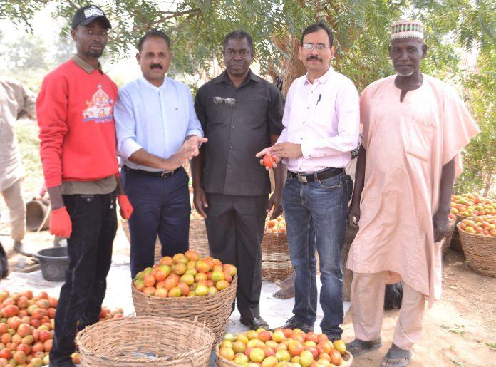 Olam Nigeria's Pilot Farming Project To Boost Nigeria's Tomato Value Chain-marketingspace.com.ng