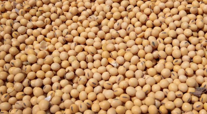 Lots of soybeans with no place to go - Marketplace