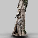 Tree with Bark Falling Off 3D Model render