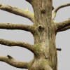 Tree Forest Environment Asset