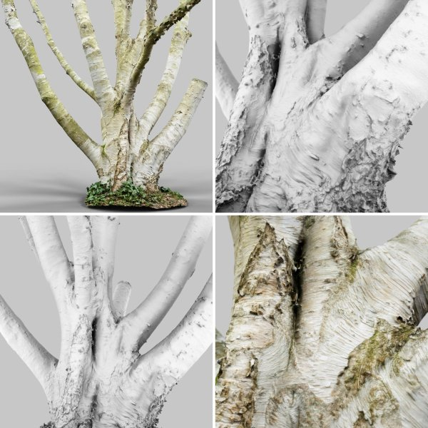 Photorealistic Forest 3D model collection