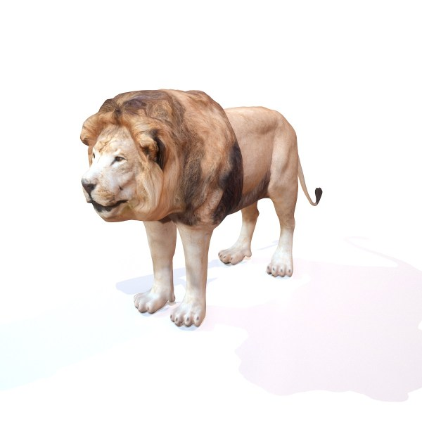 Lion Rigged 3D Model Realistic Scan Photogrammetry Animal Safari Zoo